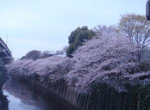 20100404_006