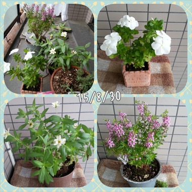 Photogrid_1440897568958