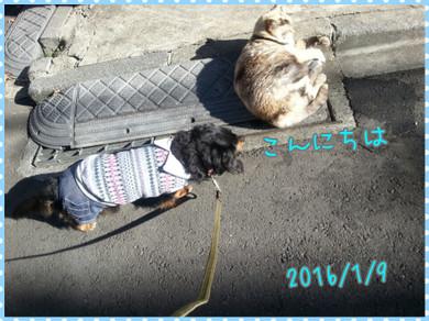 Photogrid_1452323447373