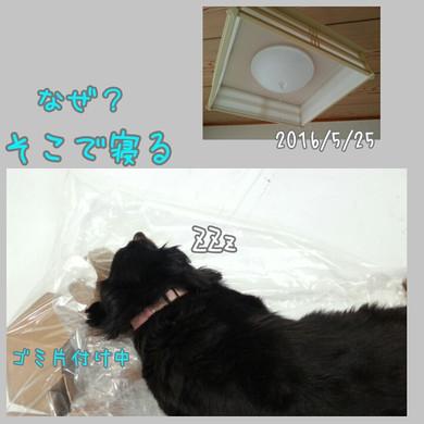Photogrid_1464138443664